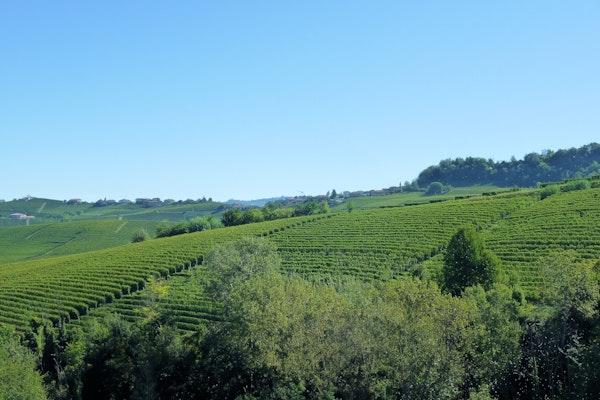 Vigne Langhe e Monferrato, CASTELLO DELLA MANTA, MANTA (CN )