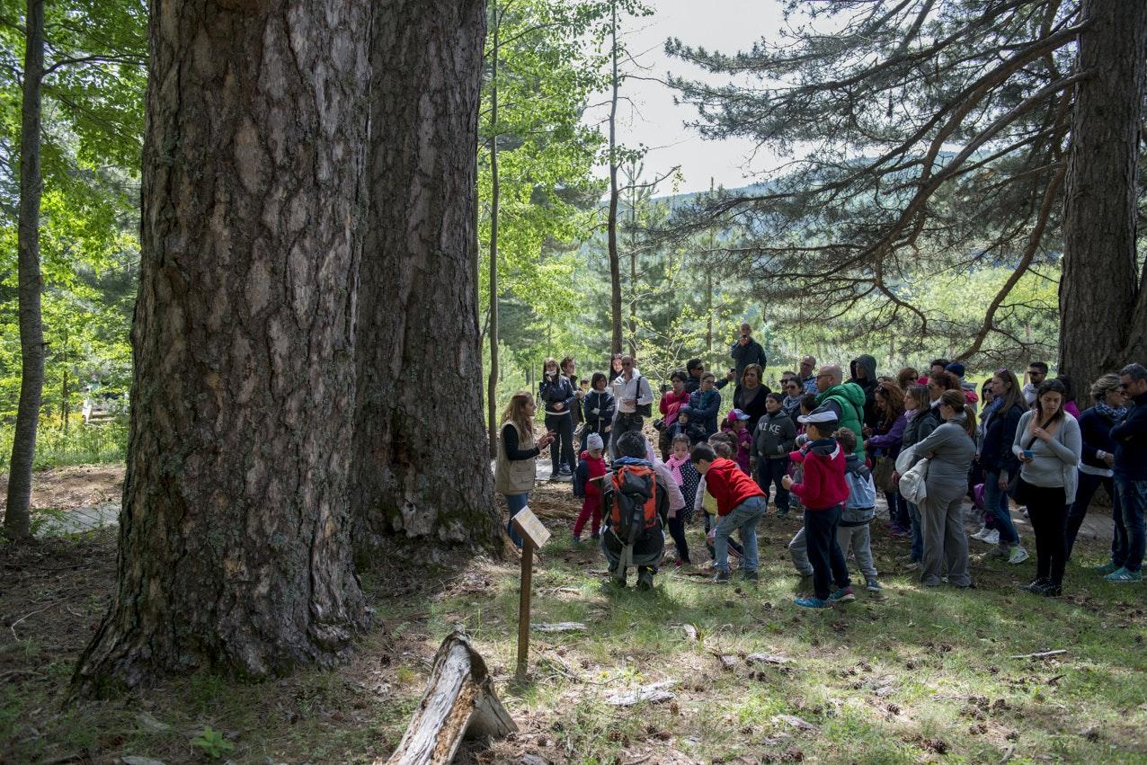 Attività nel bosco, I GIGANTI DELLA SILA, SPEZZANO DELLA SILA (CS )