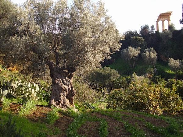 Picnic al Giardino della Kolymbethra