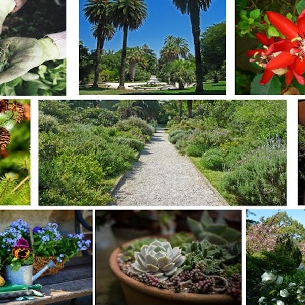 FAI Botanica