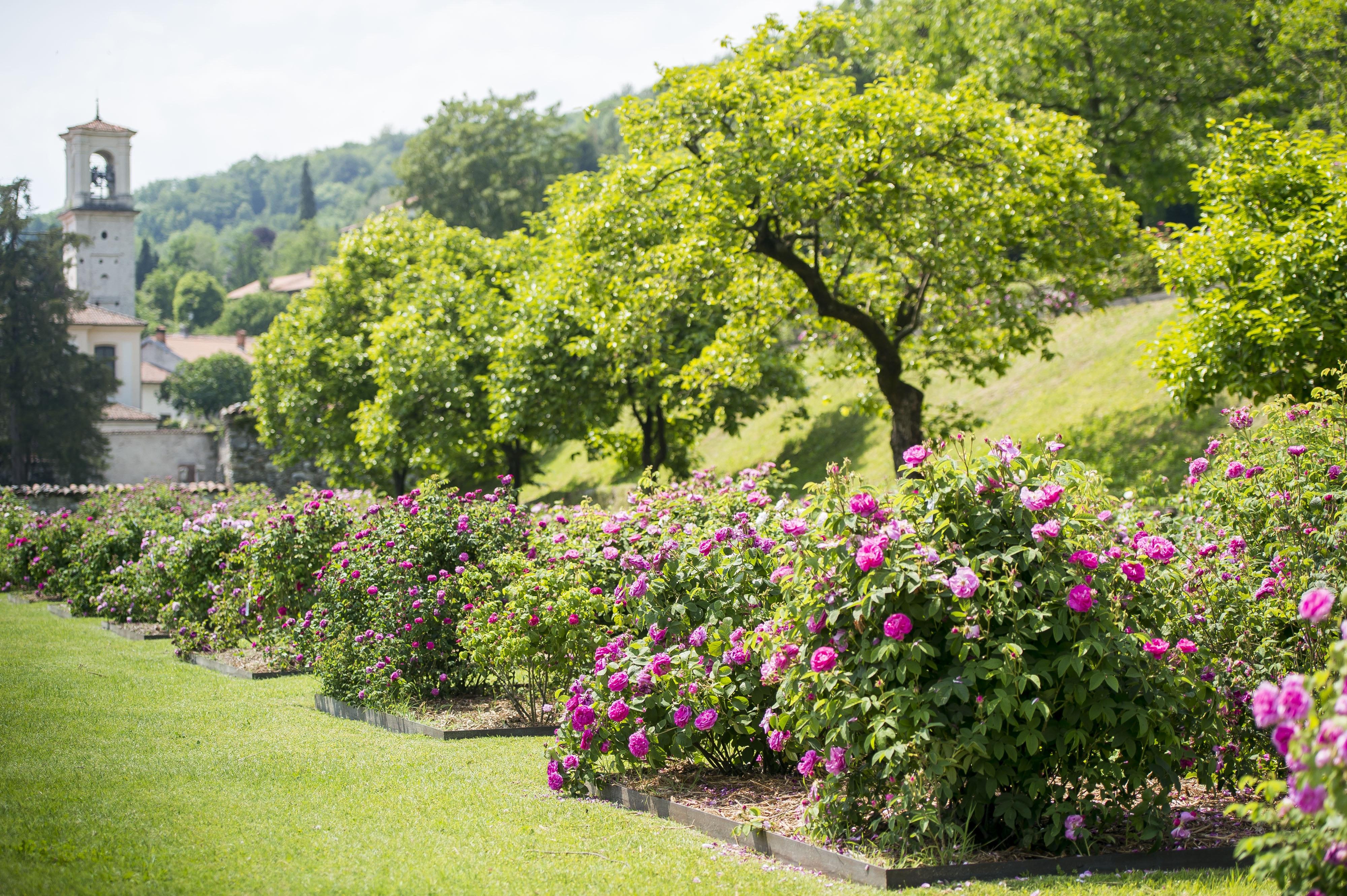 Giardino delle rose, VILLA DELLA PORTA BOZZOLO, CASALZUIGNO (VA )