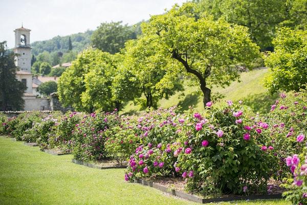 Villa della porta bozzolo bene fai - Il giardino delle rose ...