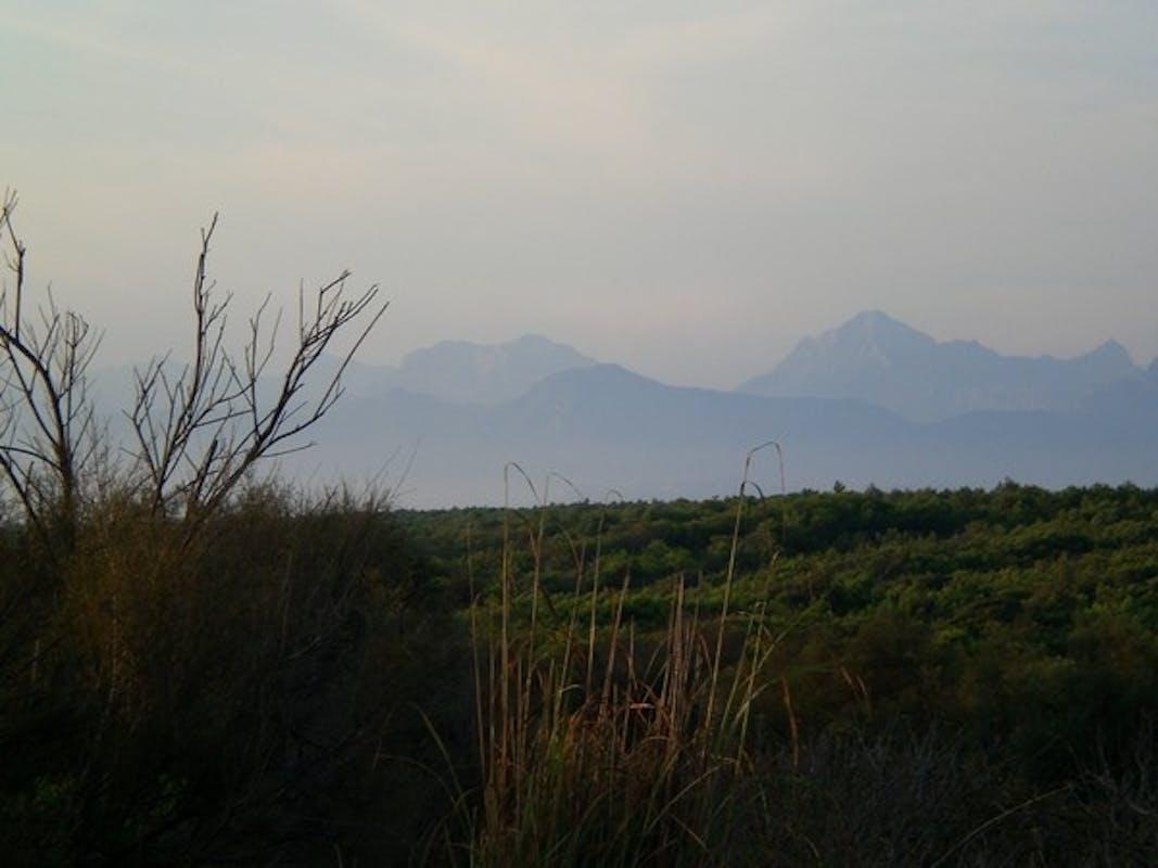 PARCO DI MIGLIARINO, SAN ROSSORE, MASSACIUCCOLI